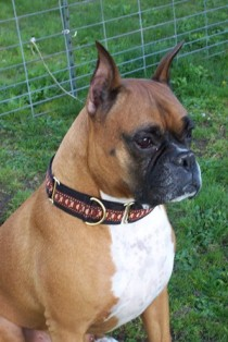 Pacific Rain Handmade Dog Collars - Jimmy